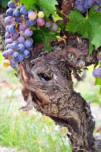 le vigne 3